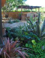 Backyard Planter with Protea, Ligularia, Agave & carpet of succulents
